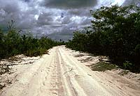 Telegraph Track, Cape York, QURE