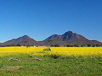 Stirling Ranges NP., WA