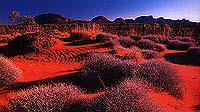 Red Center Australia: The Olgas